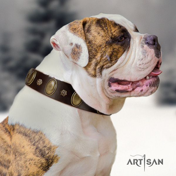American Bulldog everyday use natural leather collar with exceptional adornments for your canine