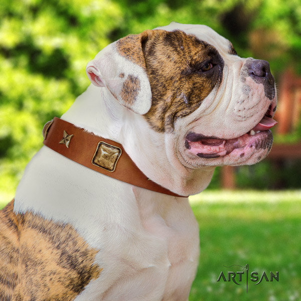 American Bulldog fancy walking full grain genuine leather collar with embellishments for your pet