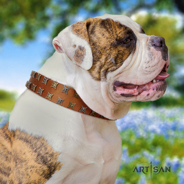 American Bulldog daily walking full grain leather collar with designer embellishments for your canine