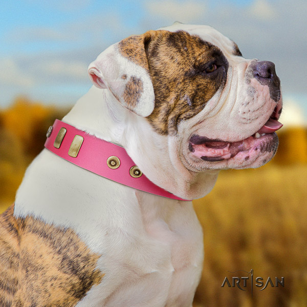 American Bulldog everyday walking leather collar with inimitable adornments for your doggie