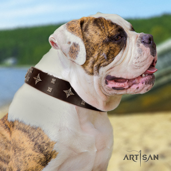 American Bulldog comfortable wearing natural leather collar with top notch adornments for your canine