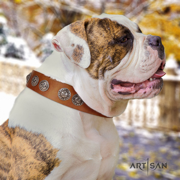 American Bulldog stylish walking natural leather collar with exquisite studs for your dog