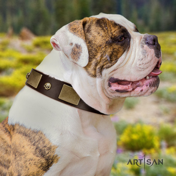 American Bulldog easy wearing natural leather collar with impressive adornments for your pet