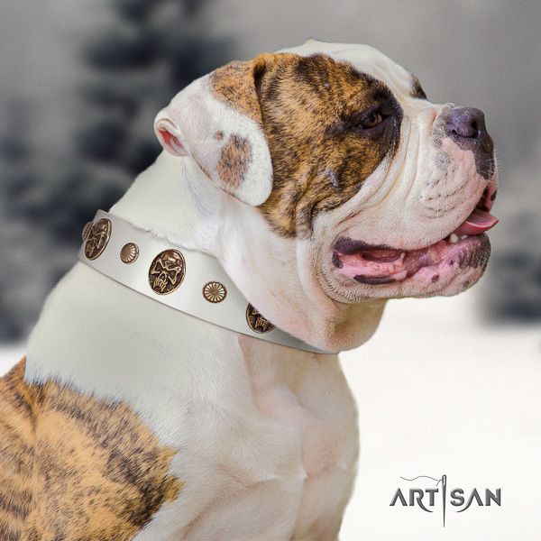American Bulldog daily walking natural leather collar with adornments for your canine