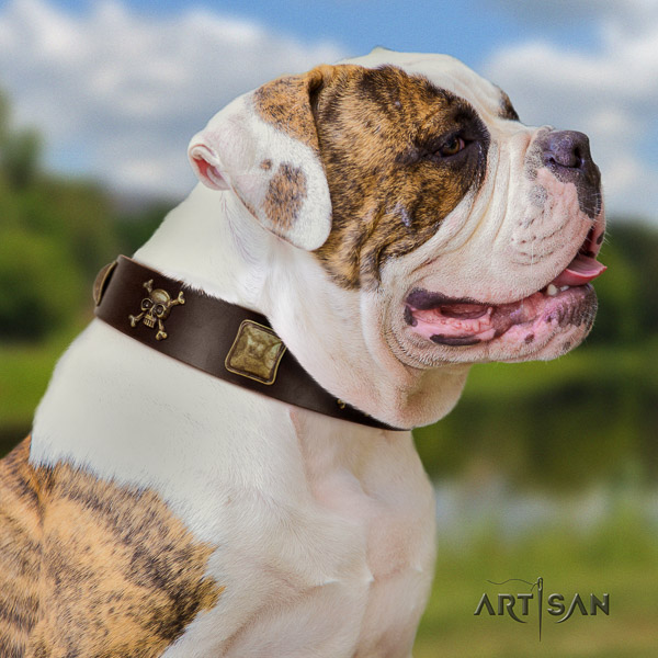 American Bulldog easy wearing leather collar with extraordinary embellishments for your pet