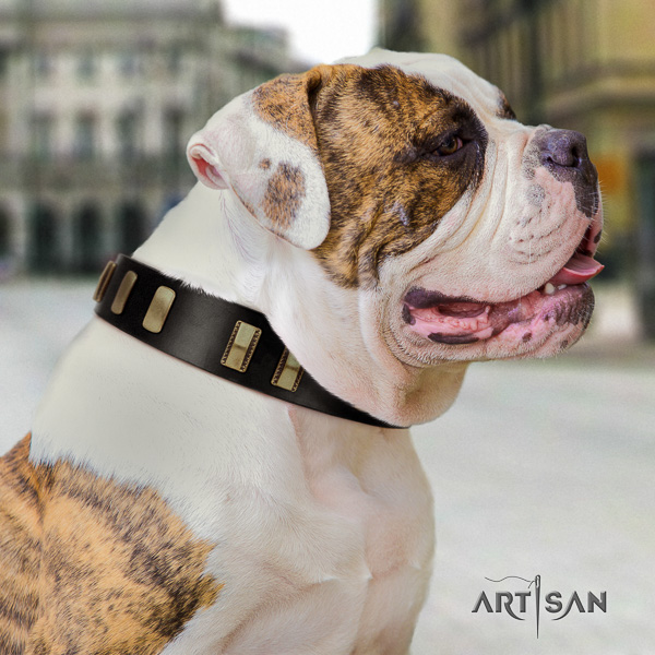 American Bulldog basic training leather collar with designer decorations for your doggie