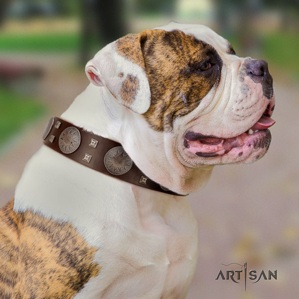 American Bulldog easy wearing leather collar with awesome adornments for your pet