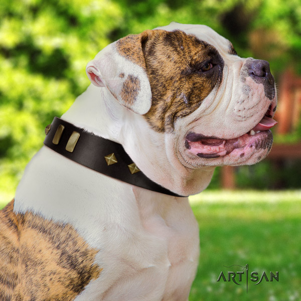 American Bulldog basic training natural leather collar with impressive embellishments for your canine