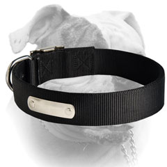 Extra wide nylon American Bulldog collar