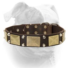 Securely riveted American Bulldog leather collar