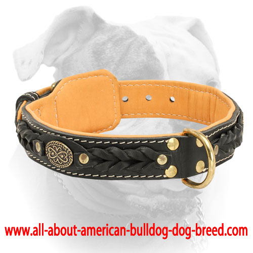 american bulldog collars classy braided nappa leather american bulldog collar c43 2757