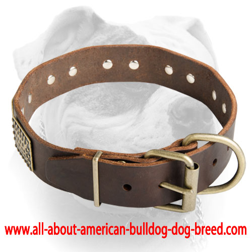 american bulldog collars luxury leather dog collar for american bulldog c89 1095 5874