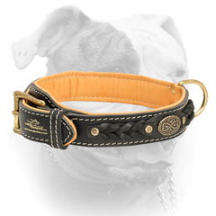 Leather American Bulldog collar with luxury medallion