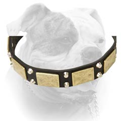 Leather American Bulldog collar with pyramids and massive plates