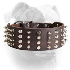 Spiked and studded American Bulldog collar