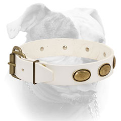 Reliable brass hardware for American Bulldog collar of white leather