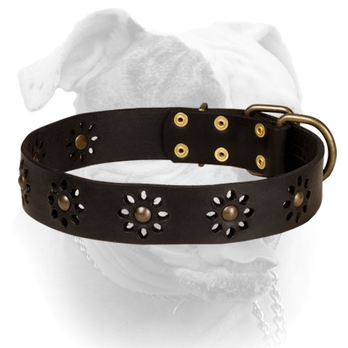 Leather American Bulldog collar with flower design