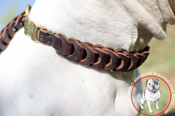 Braided American Bulldog collar with quick release buckle