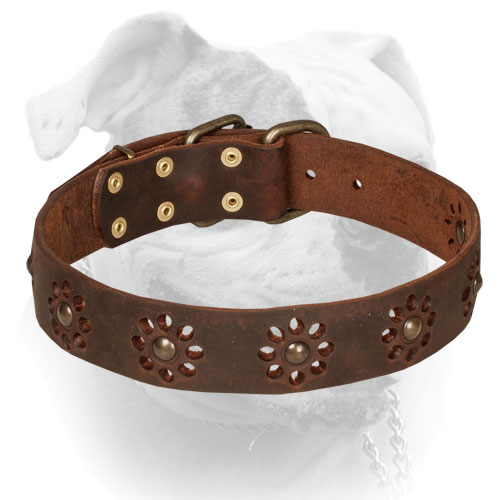 Leather American Bulldog collar with flower decoration
