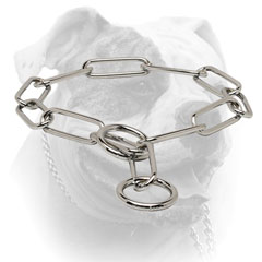 Choke chain collar for American Bulldog training