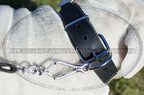 Nickel plated fittings for American Bulldog collar