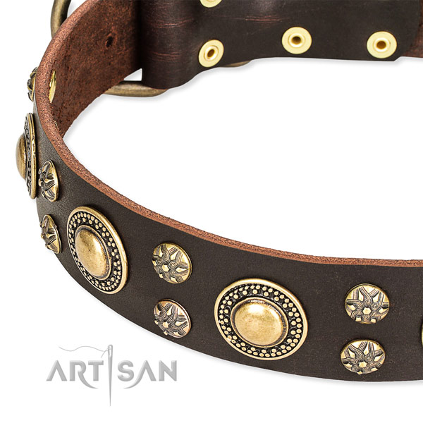 Leather dog collar with awesome decorations