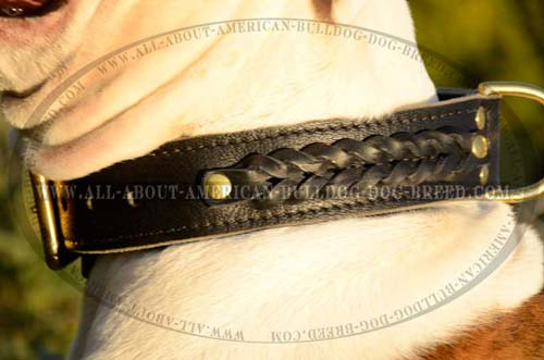 Everyday Leather Awesome Braided Collar For American Bulldog