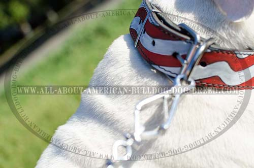 Nickel plated hardware for leather American Bulldog collar
