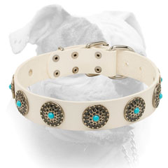White leather American bulldog collar with blue stones