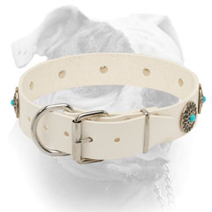 Nickel plated buckel and D-ring for white leather collar for American Bulldog