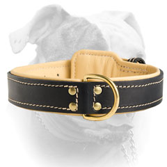 Elegant double stitched leather collar for American Bulldog