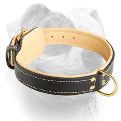 Nappa padded leather American Bulldog collar with brass hardware