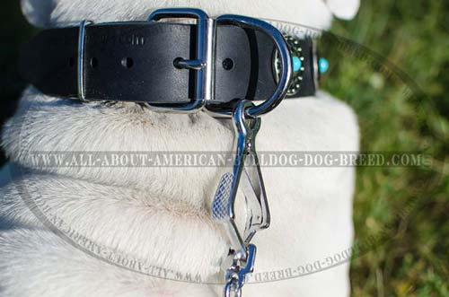 Reliable hardware for wide leather American Bulldog collar
