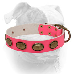 Reliable pink leather American Bulldog collar with brass hardware