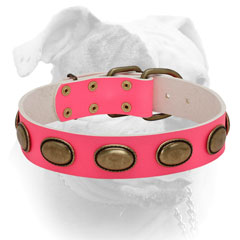 Luxury massive oval plates for pink leather collar for American Bulldog