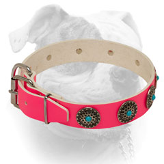 Pink leather American Bulldog collar with nickel plated fittings