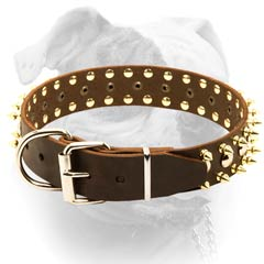 Strong brass hardware for leather American Bulldog collar