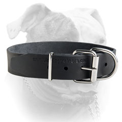 Reliable nickel hardware for leather American Bulldog collar