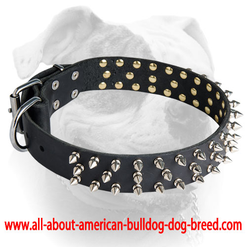 american bulldog collars awesome stylish spiked leather american bulldog collar 640