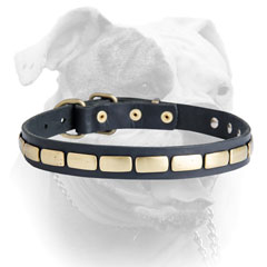 Elegant horizontal plates for American Bulldog collar