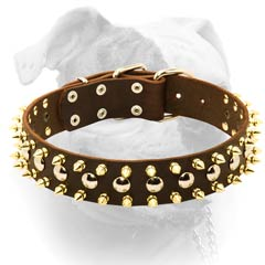 Wide leather American Bulldog collar with shiny spikes and plates