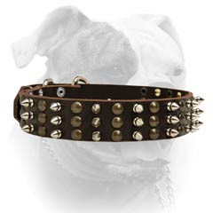Nickel plated fittings for leather American Bulldog collar