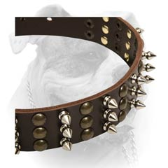 Leather American Bulldog collar decorated with spikes and studs