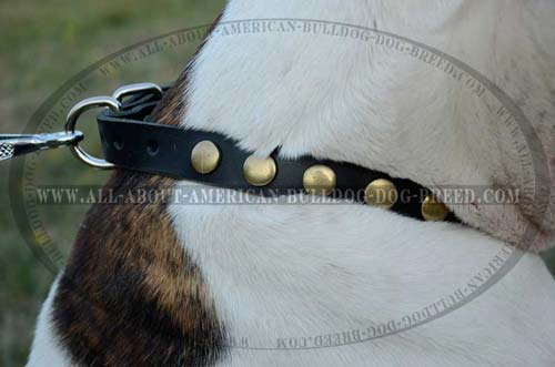 Thick Decorated Leather Collar For American Bulldog