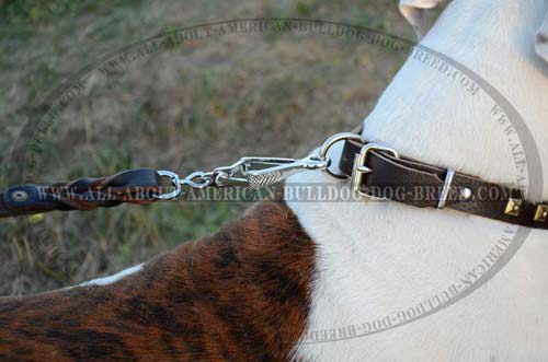 American Bulldog Decorative Leather Collar With Brass Plates.