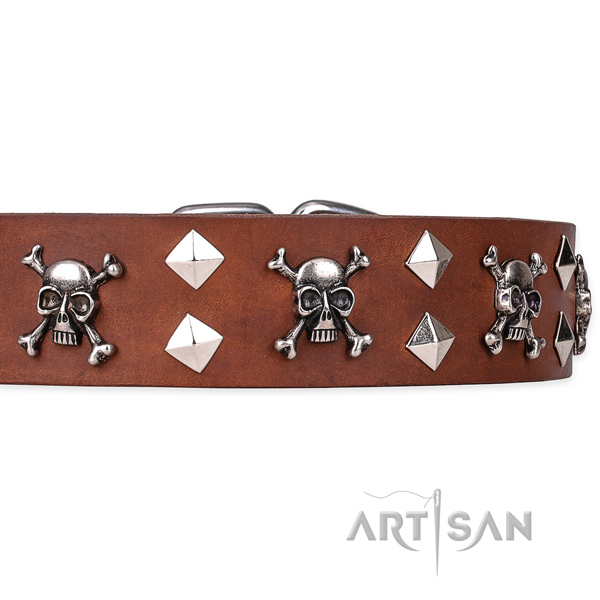 Casual style leather dog collar with refined adornments