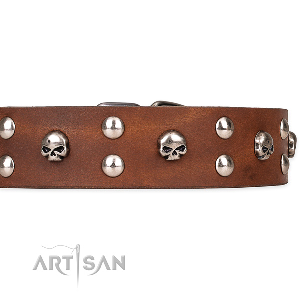 Full grain leather dog collar with polished leather strap