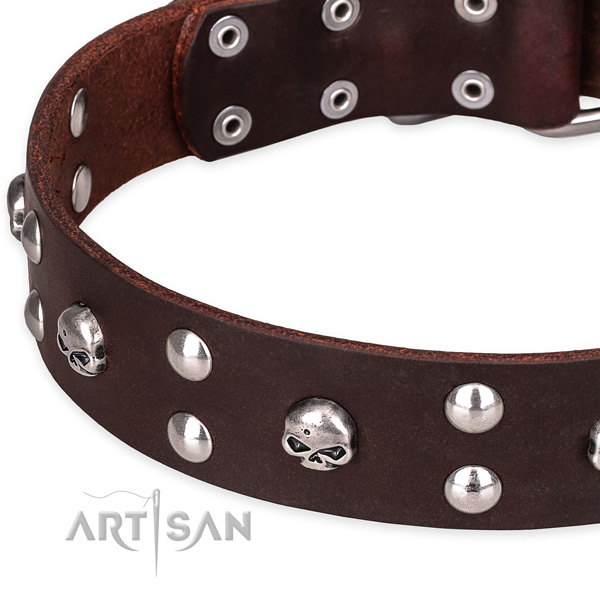 Daily leather dog collar with astounding decorations