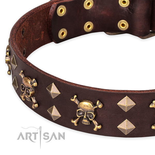 Daily leather dog collar with incredible studs