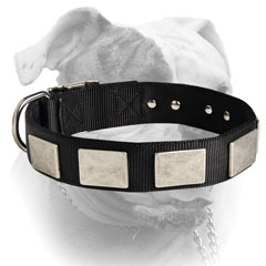 Awesome silver-like massive nickel plates for American Bulldog collar